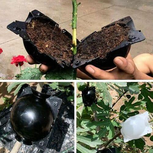 Plant Root Growing Box 5PCS