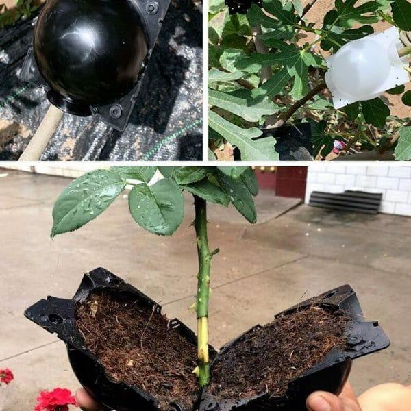 Plant Rooting/ Growing Balls (5 pcs)