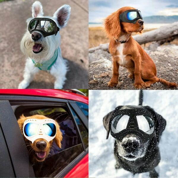 Dog Goggles Large & Small Breed